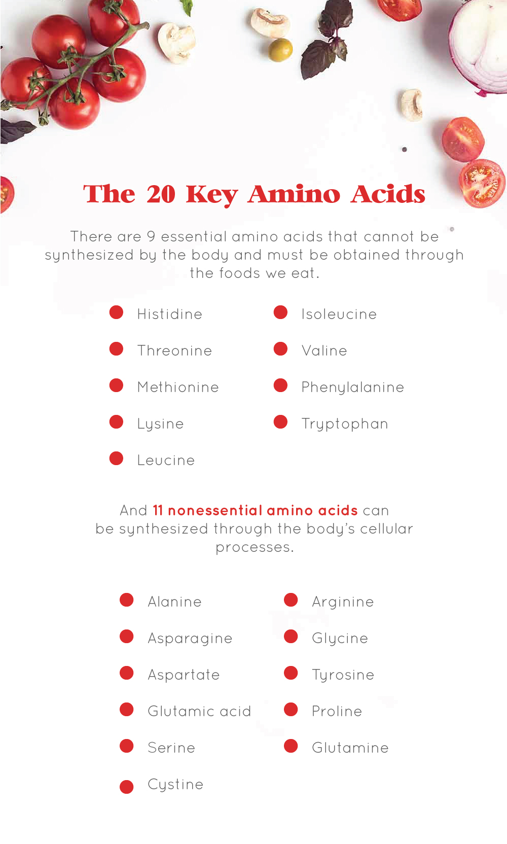 The 20 Key Amino Acids