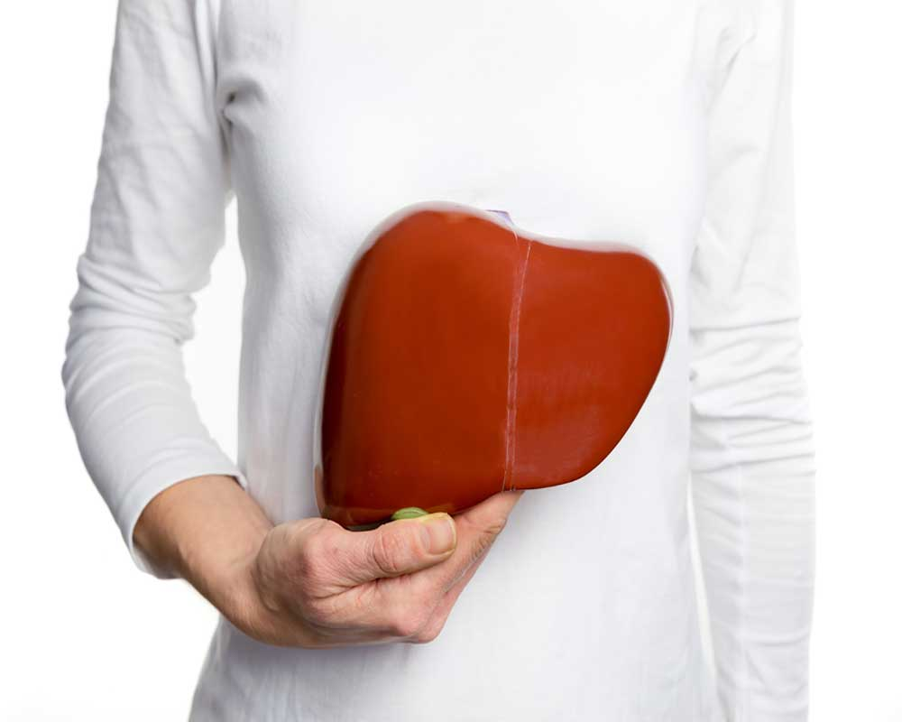 person holding liver model
