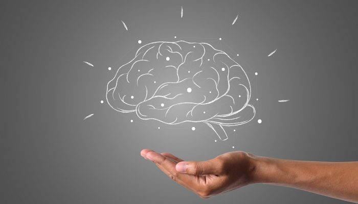 hand showing a human brain