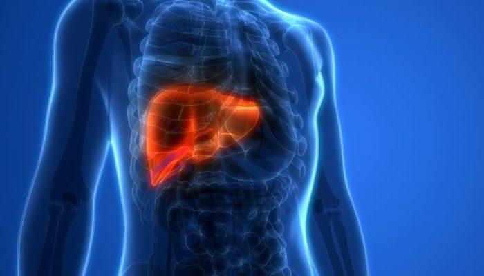liver inside a human body