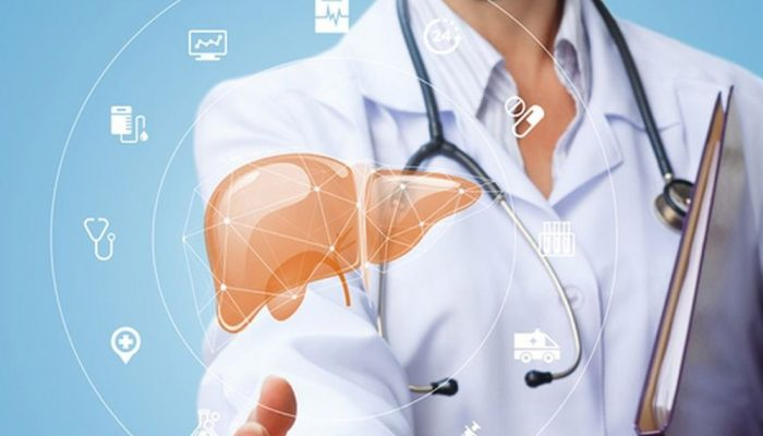 doctor showing a human liver