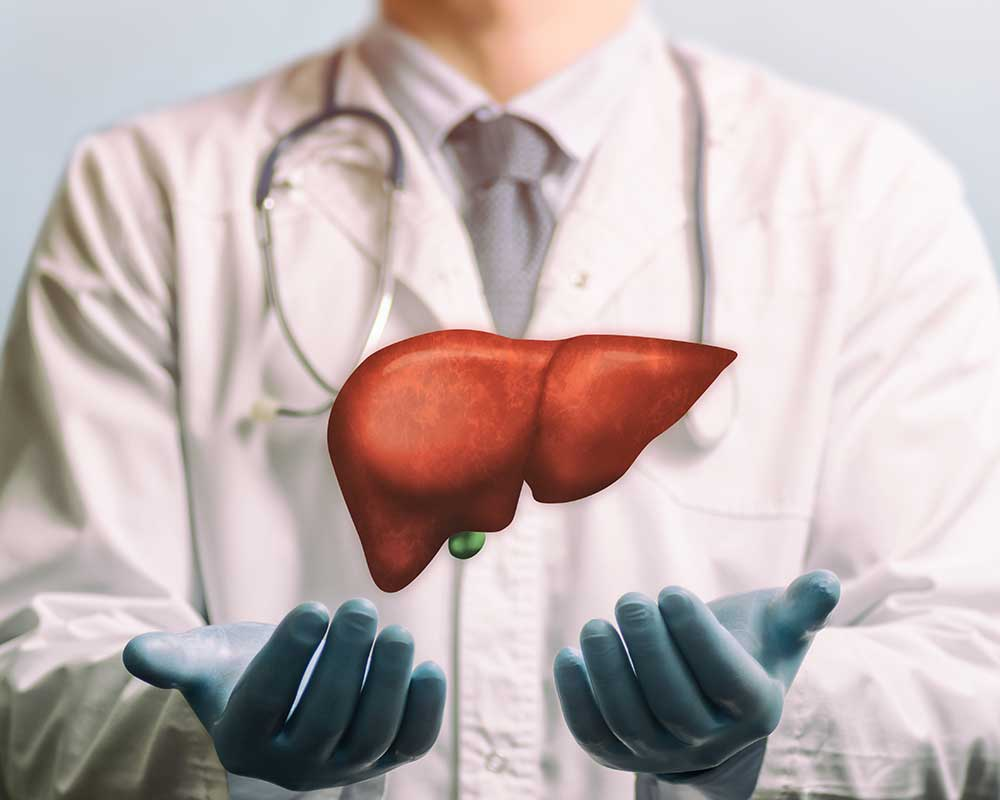 doctor wearing gloves showing a human liver