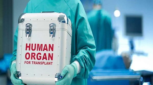 Doctor holding a storage box for organ transplant