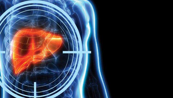 Liver inside a Transparent human body