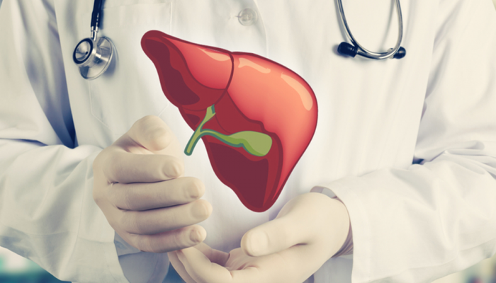 Doctor showing a healthy liver