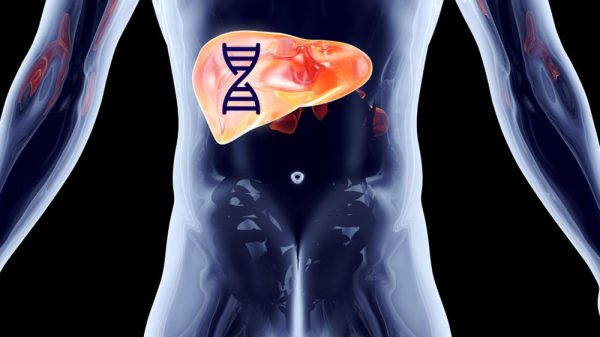 Liver Changes In Alcohol Drinking