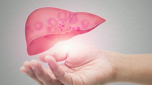 Hand showing healthy human liver