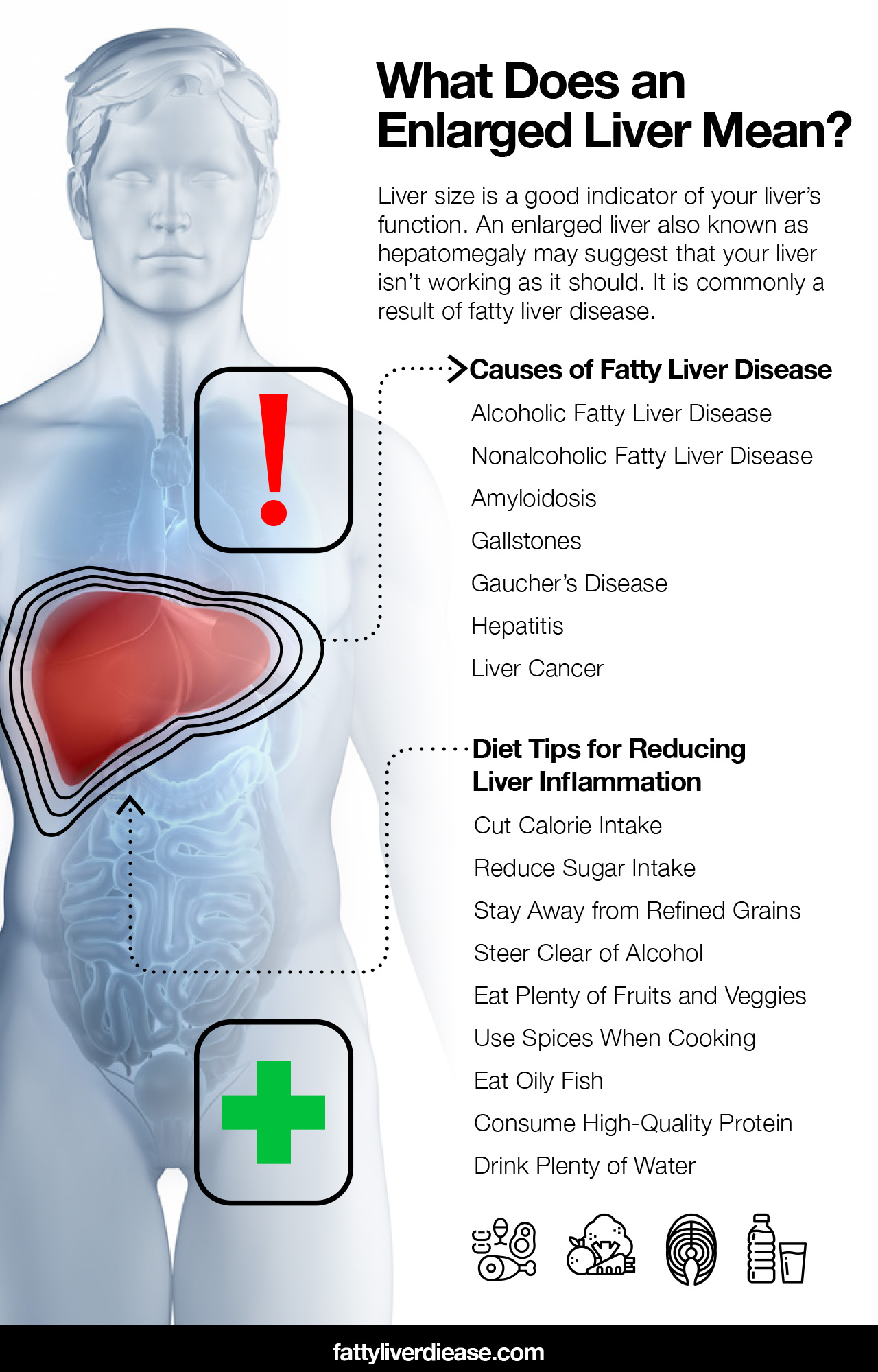 Normal Liver Size