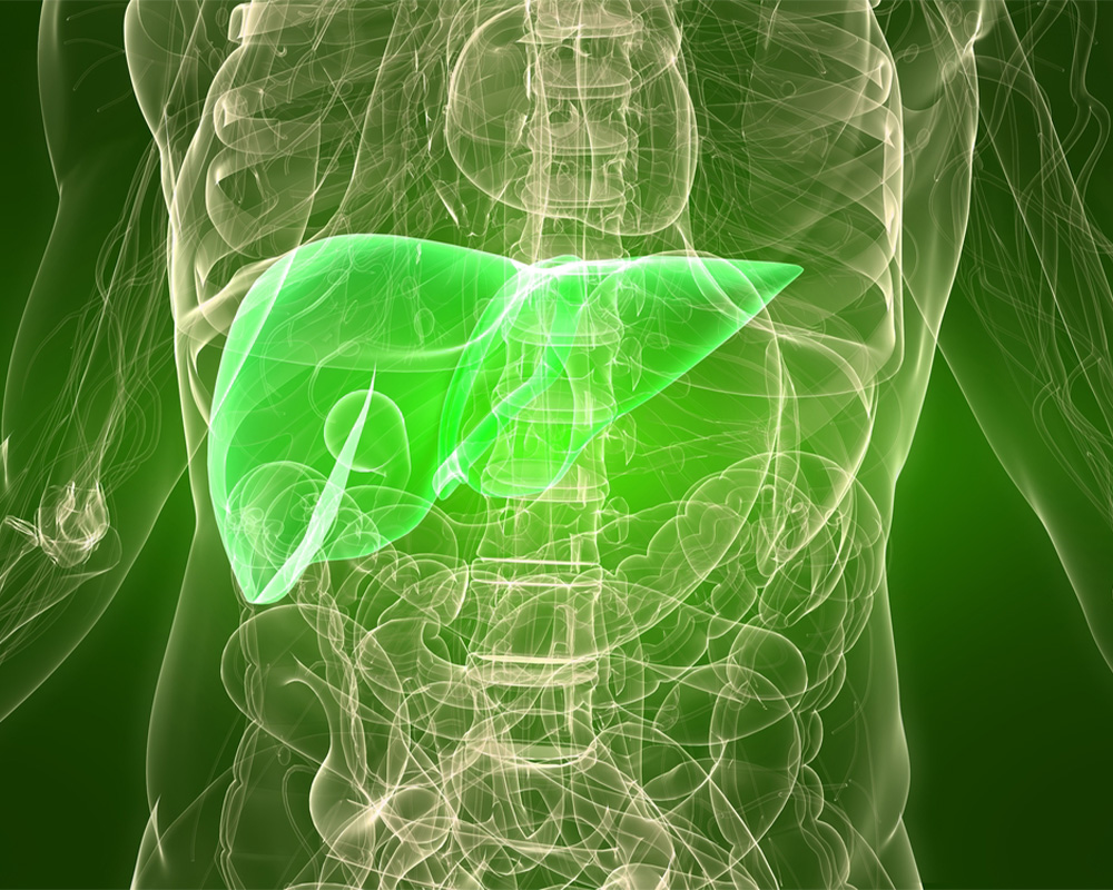 Can the Liver Heal Itself
